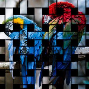 20x20-parrots-striped.jpg