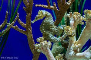 seahorse-web-300x199.jpg