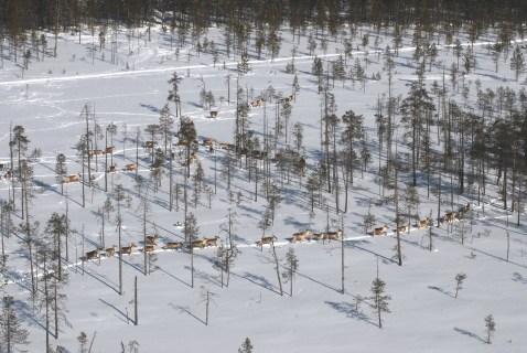 Kuva: Petri Timonen / Luonnonvarakeskus