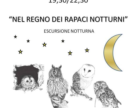 Nel regno dei rapaci notturni