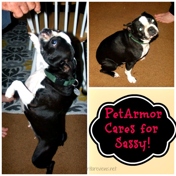 PetArmor Cares for Sassy!