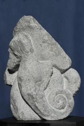Hippocampe - cheval de mer - poisson - Dominique Rivaux