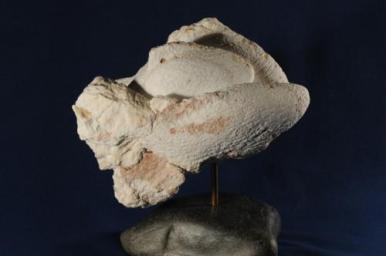 sculpture du poisson - pêche miraculeuse
