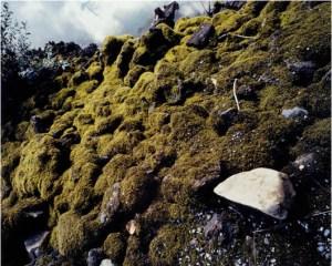Spelunking (lava park)