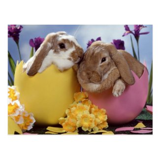 bunny postcard 10