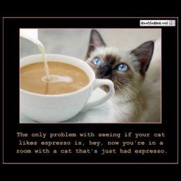 Cats On Espresso