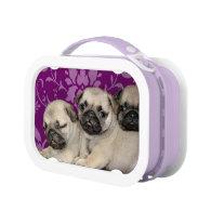 Pug dogs purple lunch box