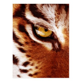 The Tiger's Eye Photograph Post Cards