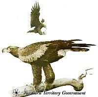 Wedge Tailed Eagle, N.T Fauna emblem.