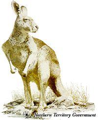 Red Kangaroo, N.T Fauna emblem.