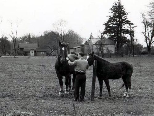 Ohio Farm Horses