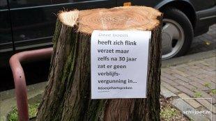Deze boom heeft zich verzet maar zelfa na 30 jaar zat er geen verblijfsvergunning in (foto Thomas Schlijper)
