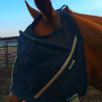Noble Outfitters Guardsman Fly Mask Review