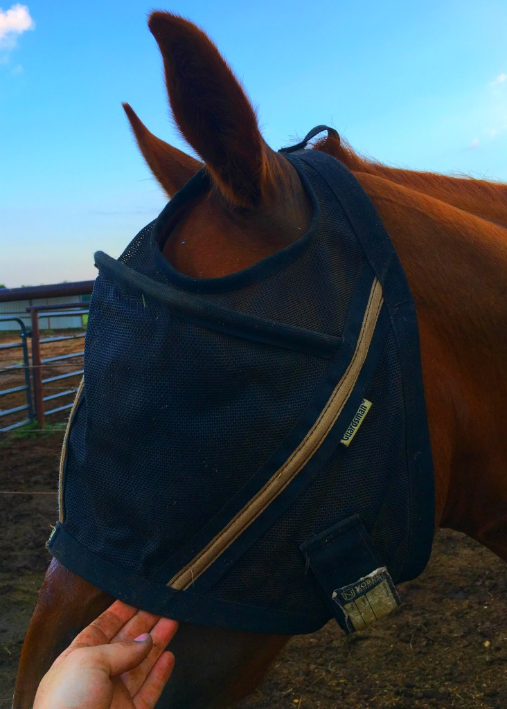 Noble Outfitters Fly Mask Review