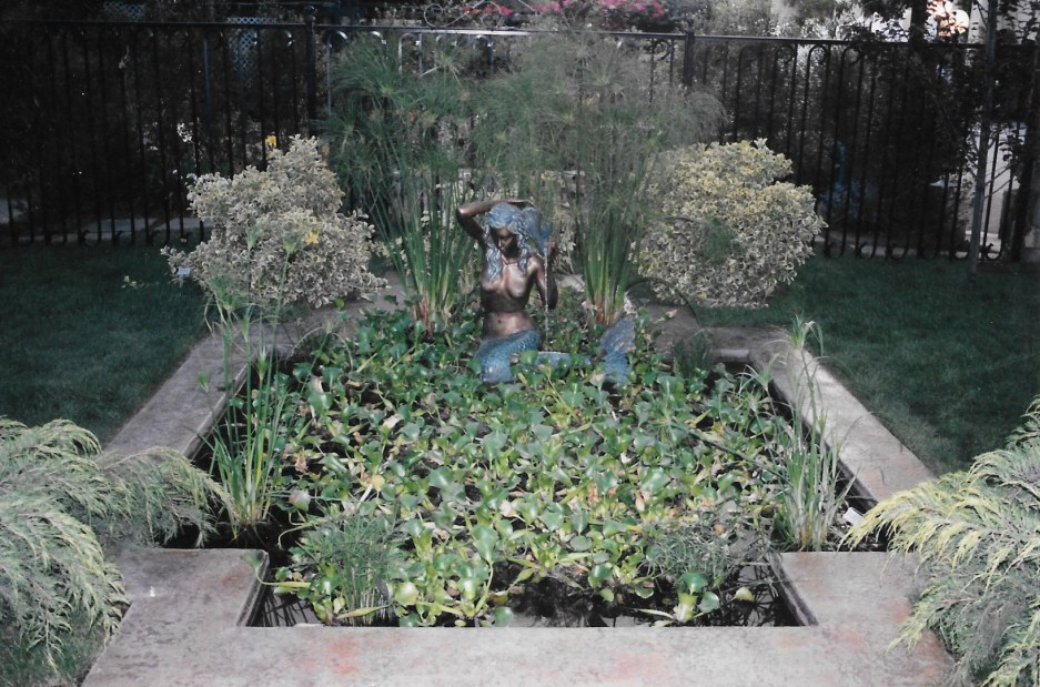 swimming pools fish ponds (18)
