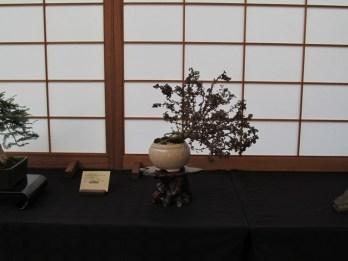 2012 ABS/BCI International Bonsai Convention