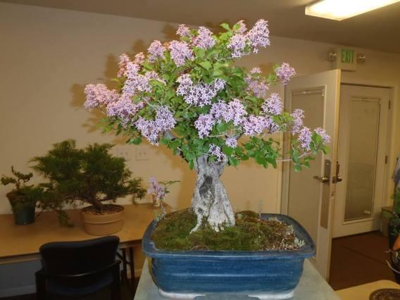 Will Kerns Lilac