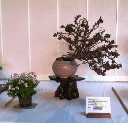 Barberry/Accent Plant 2012 RMBS Show