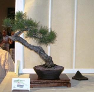 Ponderosa Pine, Artist Paul Gilbert 1