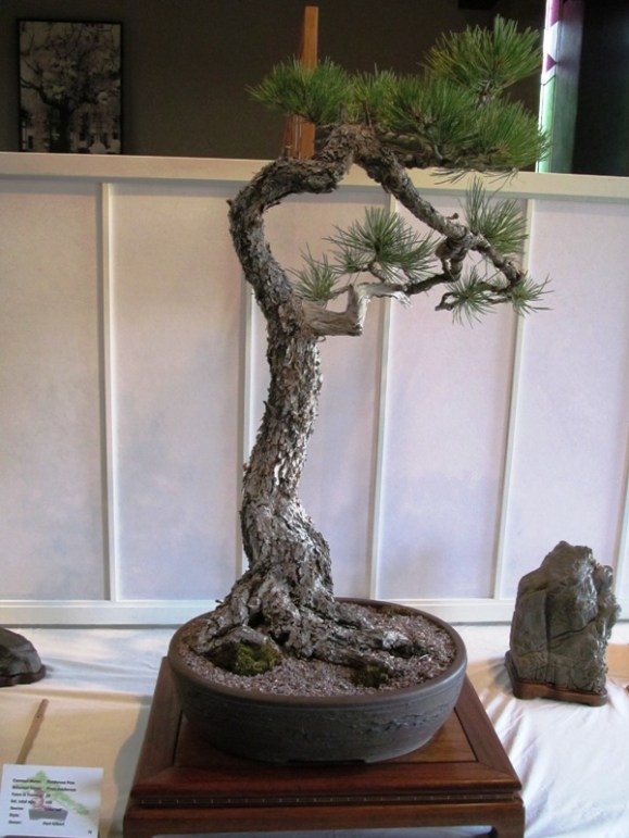 Ponderosa Pine, Artist Paul Gilbert