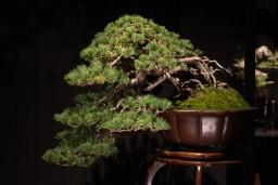 Courtesy of Jonas Dupuich - White pine