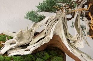 Courtesy of Jonas Dupuich - Trunk with deadwood