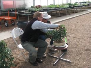 Larry and Darrel Strangler Ficus