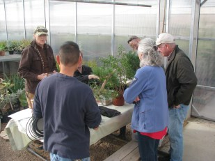 Japanese Black Pine Discussion