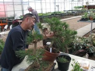 Gary & Terril Jap Black Pines
