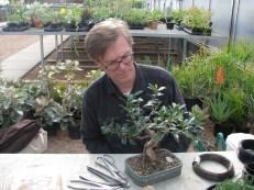 David working on Ficus