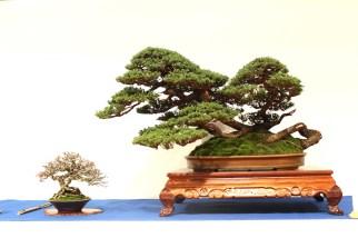 Courtesy of Bonsai Empire