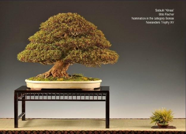 Courtesy of Bonsai Association Belgium