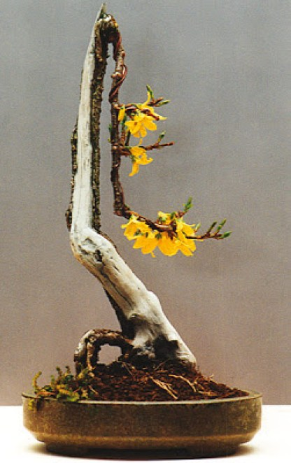Courtesy Reiners Bonsai Blog