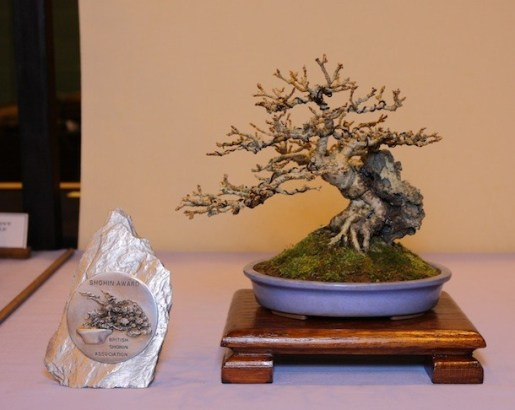 Courtesy of Swindon Bonsai