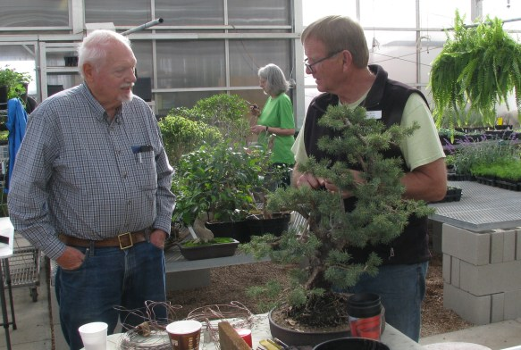 Larry & Allan - Colorado Blue Spruce