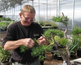 Larry Jackel - Limber Pine