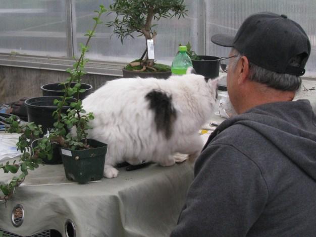 Lou an Jinx the cat