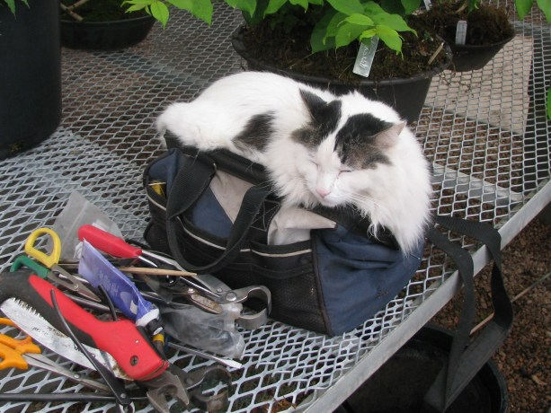 Jinx the cat using my bag, at least he is not peeing in it again!!