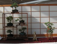 Various Shohin Bonsai