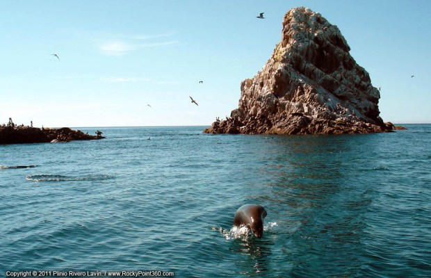 isla-san-jorge-bird-island
