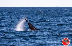 ecofun whalewatching  005