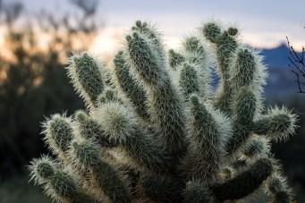 Arizona_Phoenix_Lost Dutchman 6396