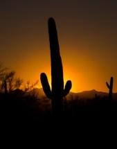 Arizona_Tucson_Justin Diamond J's Resort trails_1135