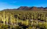 Arizona_Tucson_Saguaro National Park0763