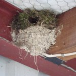 nest on nest