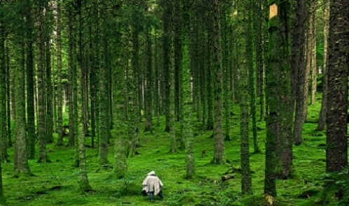 2013-11-Hiking-Forest-Wallpaper