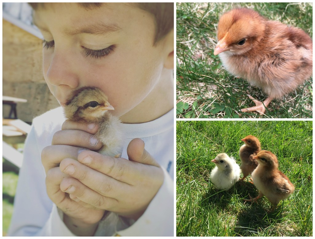 We Got Chickens | Rooms FOR Rent Blog
