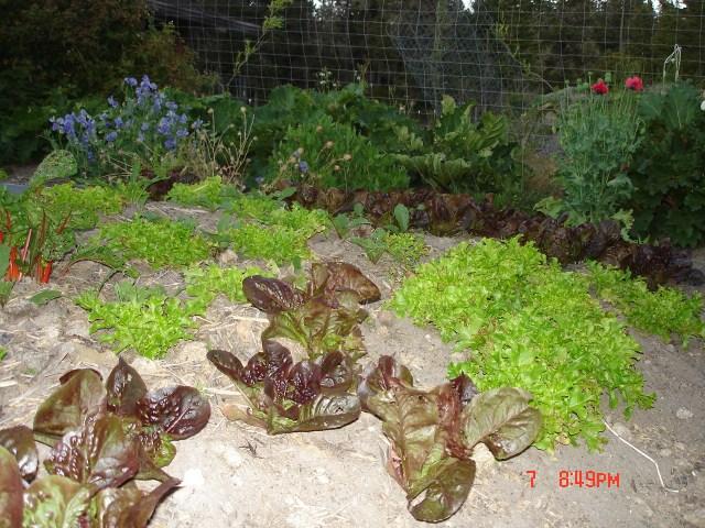 Garden in July 026