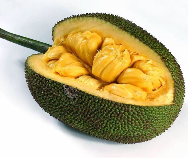 7. Champion fruit size fruits that grow on trees - Jackfruit (Indian breadfruit). Ripe fruit zhitsya kolichestvoimeyut large yellow-green, up to 90 cm in diameter and up to 35 kg of weight. Flesh dzhekfrukta very nutritious and tastes like a fruit gum, which is not surprising because it contains white sticky latex. Most jackfruit distributed in South India.