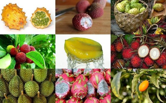 Fruits with the exotic appearance (11 photos)